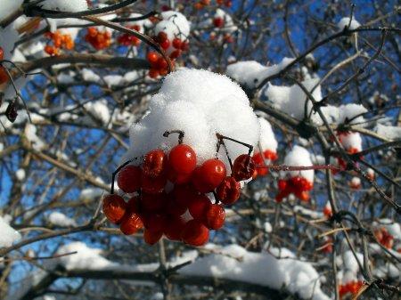 Зима на юге