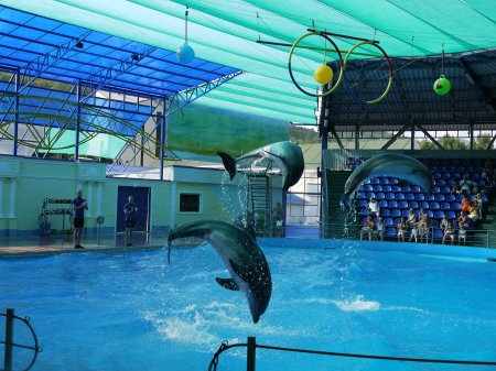 Сочинский Дельфинарий