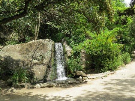 Парк в Алупке